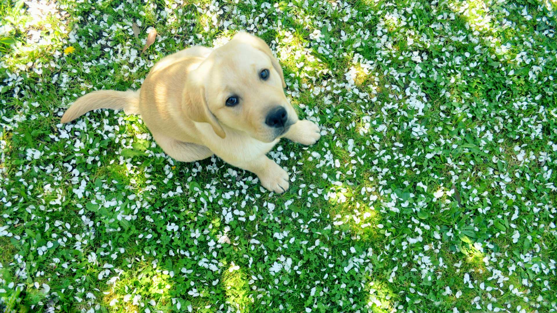 dog_and_spring-wallpaper-1920x1080